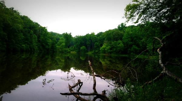 nature meditation 1