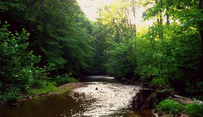 nature meditation 2